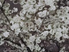 池田昌子 公式ブログ/上野の桜 画像3