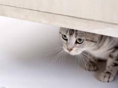 池田昌子 公式ブログ/ネコのなまえは・・・  画像1