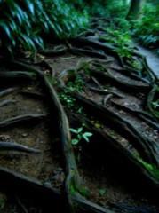 池田昌子 公式ブログ/小川のせせらぎに癒されて。。。 画像2