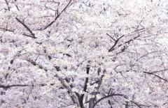 池田昌子 公式ブログ/ありがとう。。。 画像1