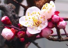 池田昌子 公式ブログ/3月8日  画像1