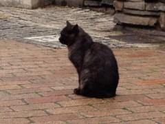 池田昌子 公式ブログ/週末のネコ 画像1