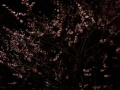 中村アン 公式ブログ/春一番 画像2