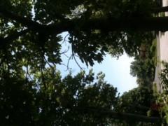 中村アン 公式ブログ/夏至 画像1