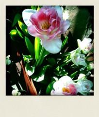 中村アン 公式ブログ/素敵 画像2
