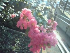 中村アン 公式ブログ/ピンクの花 画像1