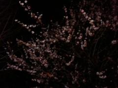 中村アン 公式ブログ/春一番 画像1