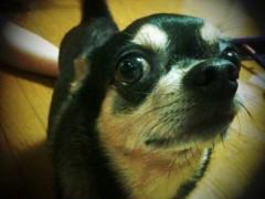中村アン 公式ブログ/cocoA 画像2