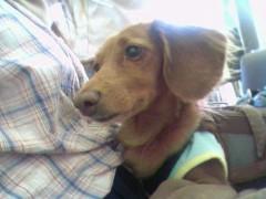 中村アン 公式ブログ/dogだワン 画像1