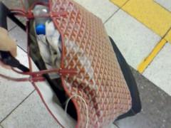 中村アン 公式ブログ/PINKY 画像1