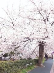 桂米多朗 公式ブログ/川崎市多摩区ニケ領用水の桜 画像2