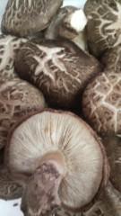 桂米多朗 公式ブログ/原木しいたけ 画像2