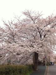 桂米多朗 公式ブログ/川崎市多摩区ニケ領用水の桜 画像1