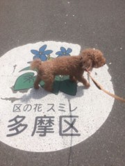 桂米多朗 公式ブログ/将くんと多摩川南武線 画像1