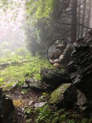 矢野武 公式ブログ/『 濃霧トレッキング 』 画像2