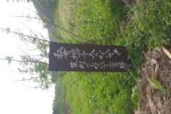 かりゆし58 公式ブログ/グリコ 画像1