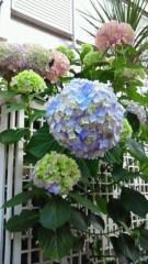 コウダリョウイチ 公式ブログ/紫陽花 画像3