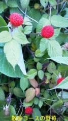 コウダリョウイチ 公式ブログ/野苺。 画像1