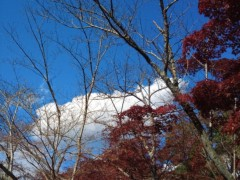 コウダリョウイチ 公式ブログ/☆紅葉☆ 画像3