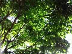 コウダリョウイチ 公式ブログ/☆空に咲く花☆ 画像2