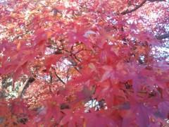 コウダリョウイチ 公式ブログ/冬風シグナル。 画像1