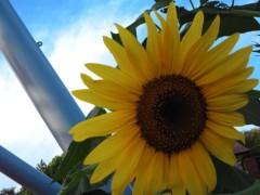 コウダリョウイチ 公式ブログ/☆空に咲く花☆ 画像1