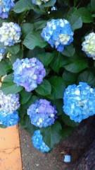 コウダリョウイチ 公式ブログ/紫陽花 画像1