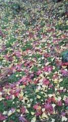 コウダリョウイチ 公式ブログ/ぶち山口県。 画像2