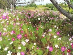 コウダリョウイチ 公式ブログ/野に咲く花のように。 画像1
