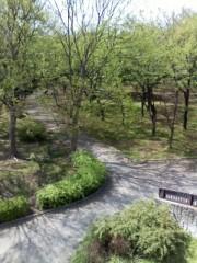 アメンボ プライベート画像 公園