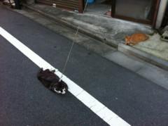 児玉翔(BOYS 4 MEN ごぉ!) 公式ブログ/猫ちゃん 画像1