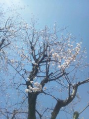 伊藤恵輔 公式ブログ/もう顔にしか見えない。♪ヽ(´▽`)/ 画像2