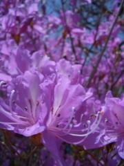 伊藤恵輔 公式ブログ/『花桃の里』お写真めどれ〜。その� 画像2