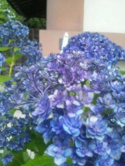 伊藤恵輔 公式ブログ/六月といえば紫陽花なんだぜin鎌倉。其の四(おわり)ヽ( ̄▽ ̄)ノ 画像1