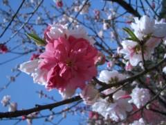 伊藤恵輔 公式ブログ/『花桃の里』お写真めどれ〜。その� 画像3