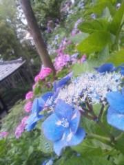 伊藤恵輔 公式ブログ/六月といえば紫陽花なんだぜin鎌倉。其の三ヽ( ̄▽ ̄)ノ 画像2