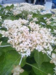 伊藤恵輔 公式ブログ/六月といえば紫陽花なんだぜin鎌倉。其の二ヽ( ̄▽ ̄)ノ 画像3