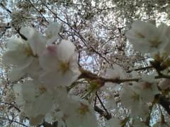 伊藤恵輔 公式ブログ/天気の良いこんな日は。 画像2