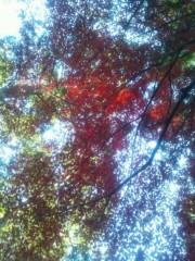 伊藤恵輔 公式ブログ/12月だけど紅葉みれますた。(*´∇`*) 画像1
