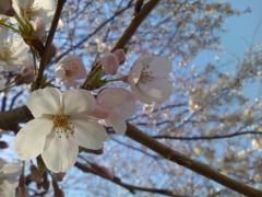伊藤恵輔 公式ブログ/桜の開花が始まってま〜す。  画像1