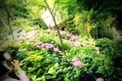 伊藤恵輔 公式ブログ/六月といえば紫陽花なんだぜin鎌倉。其の四(おわり)ヽ( ̄▽ ̄)ノ 画像2