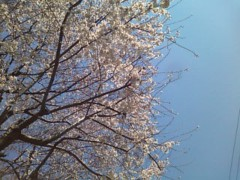 伊藤恵輔 公式ブログ/桜の開花が始まってま〜す。  画像2