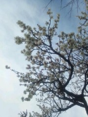 伊藤恵輔 公式ブログ/もうじきお花見timeです。(*´∇`*) 画像1
