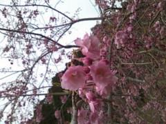 伊藤恵輔 公式ブログ/たまには華と触れ合いましょ 画像1
