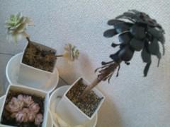 伊藤恵輔 公式ブログ/部屋の中の緑色。 画像1