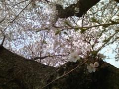伊藤恵輔 公式ブログ/天気の良いこんな日は。 画像1