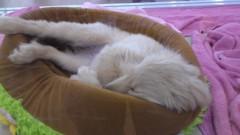 小林洋平 公式ブログ/犬が可愛い。 画像1