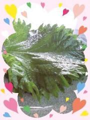 黒崎えりか 公式ブログ/色が濃いの〜(=^▽^=) 画像1