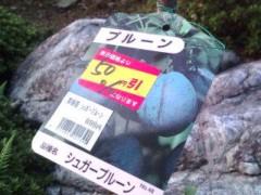 松川修也 公式ブログ/庭の新しい仲間果物編 画像1