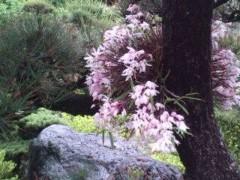 松川修也 公式ブログ/雨の庭も風流です 画像1
